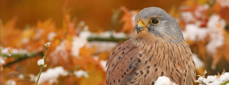 What's On | Half Price Ticket Offer for Hawk Conservancy | Andover & Villages